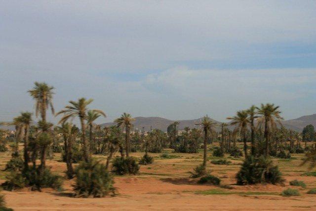 El Palmeral de Marrakech