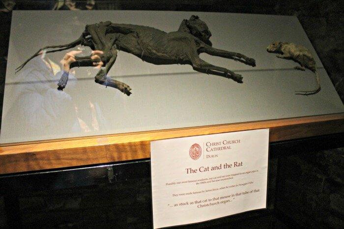 El Gato y el Ratón en Christ Church