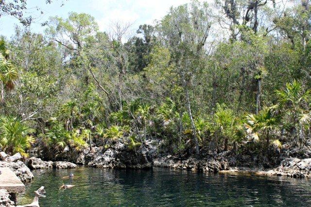 Árboles en la cueva más profunda de Cuba