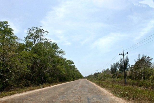 Cangrejos aplastados en las carreteras de Cuba