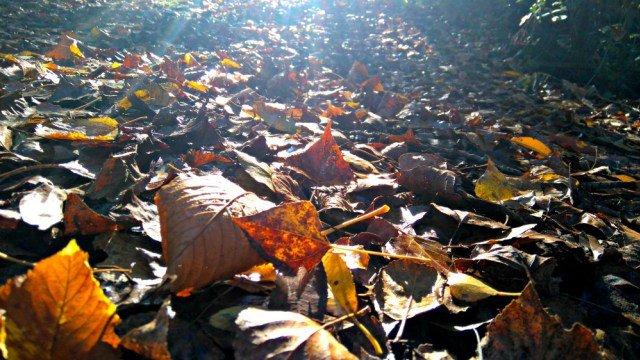 Manto de hojas en el suelo en otoño