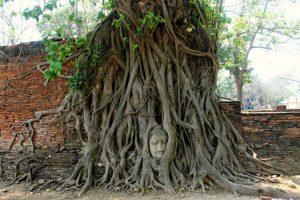 Cabeza de Buda en el árbol - Ayutthaya