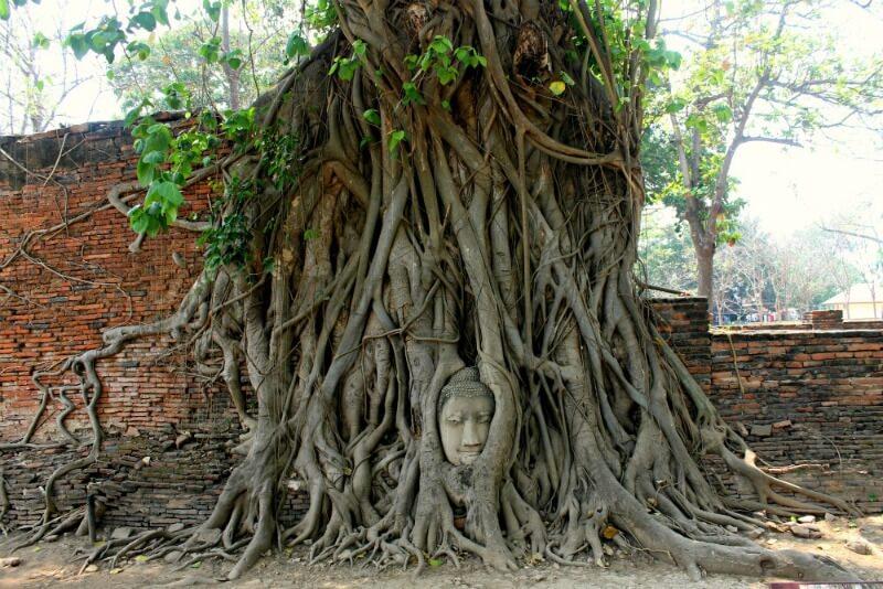 Cabeza de Buda en el árbol - Visitar Tailandia