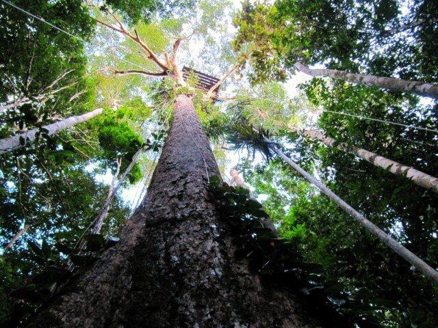 Canopy en la selva del río Amazonas