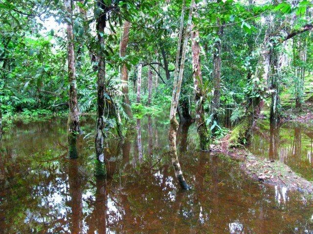 Viajar a la selva del Amazonas con guía