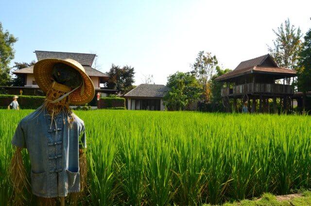 Espantapájaros en los arrozales de Chiang Mai