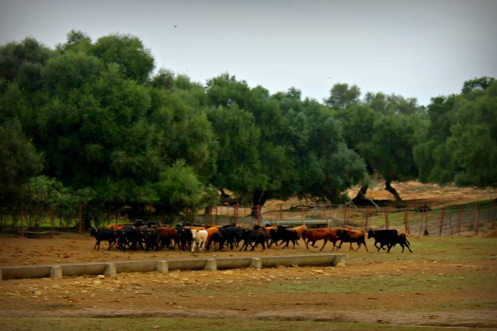 Visitar una ganadería de toros bravos en Cádiz