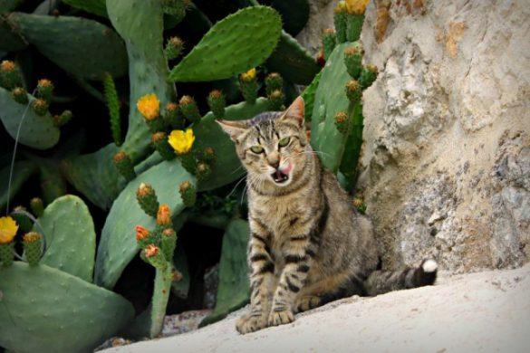 Un gato cualquiera que podría ser Blaky