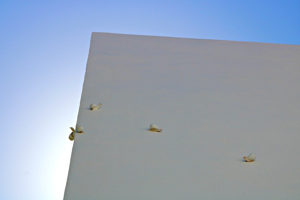 Caracoles trepando - Intervenciones de Rota