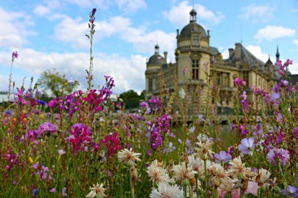 Flora del Palacio de Chantilly