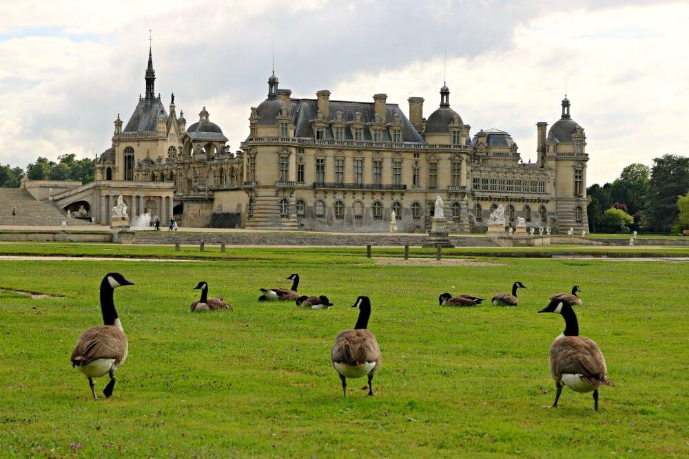 Patos en los jardines del Palacio de Chantilly