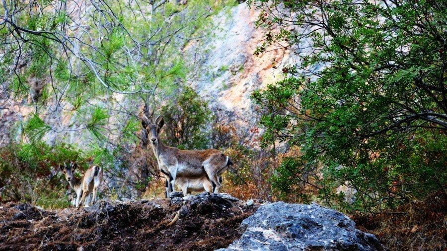 Compañeros de viaje en la Sierra de Cazorla