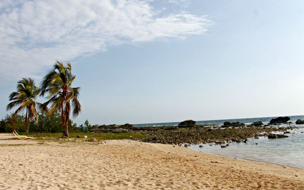 Palmeras en Playa Ancón