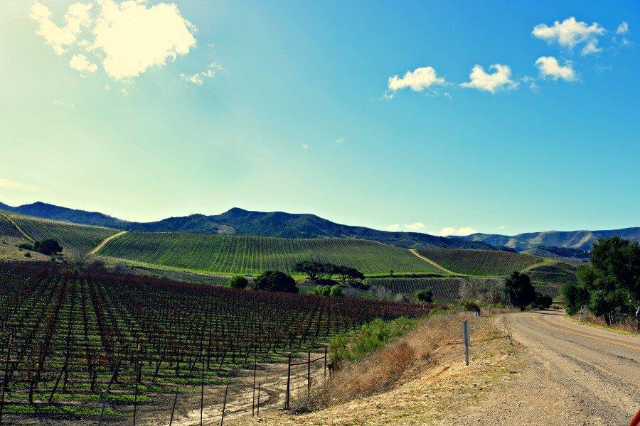 Ruta del vino de California en coche
