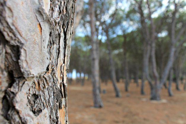 Bosque en las playas de Orosei