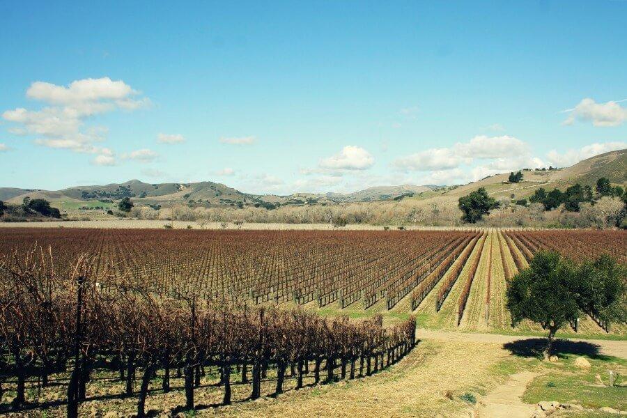 Visitar los viñedos de California - Qué hacer en Los Ángeles