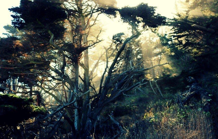 Parque Estatal de Point Lobos en California