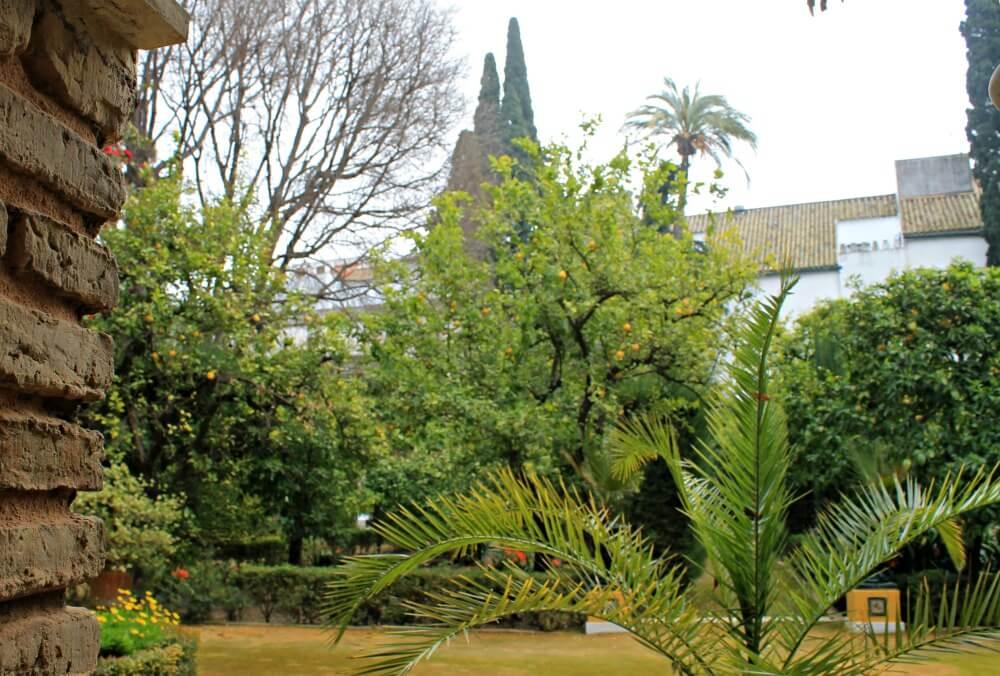 Patio de los Limones de Sevilla