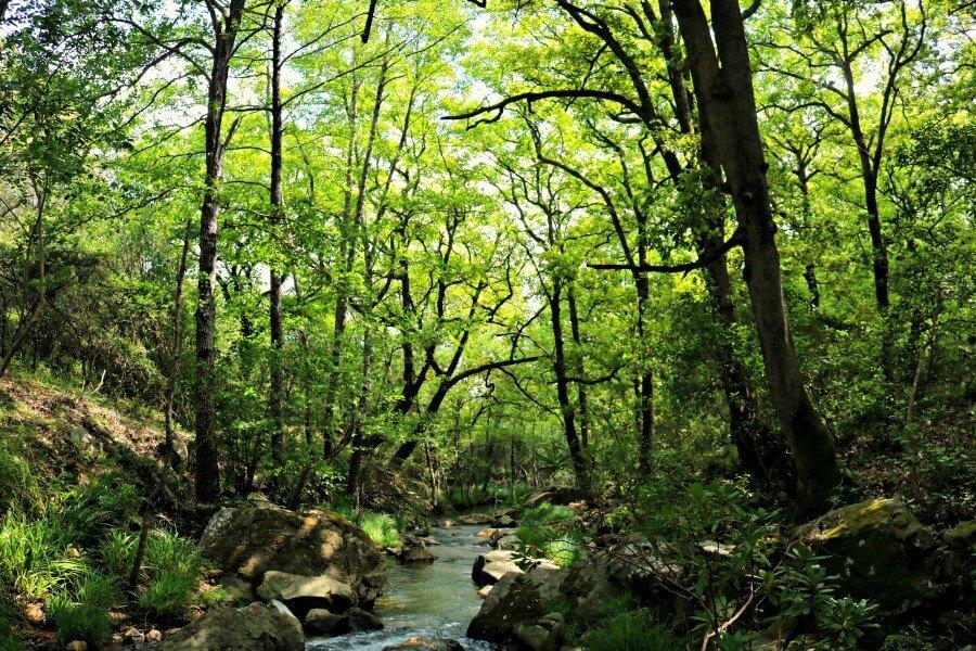 Riachuelo en nuestro sendero en el Parque de Los Alcornocales