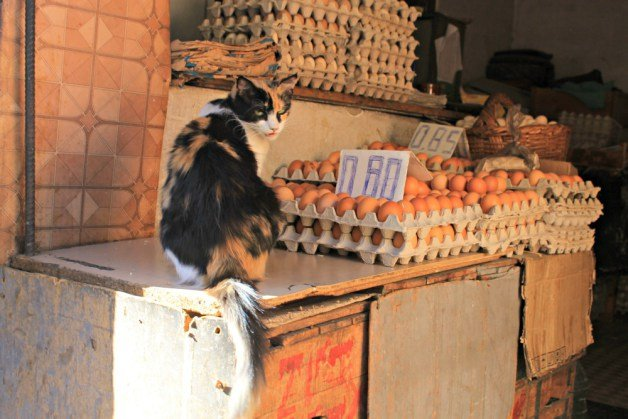 Gato y huevos en Tetuán