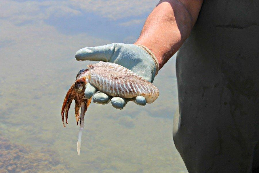 Pesca del choco en Chipiona
