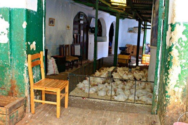 Pollos en la Medina de Tetuán