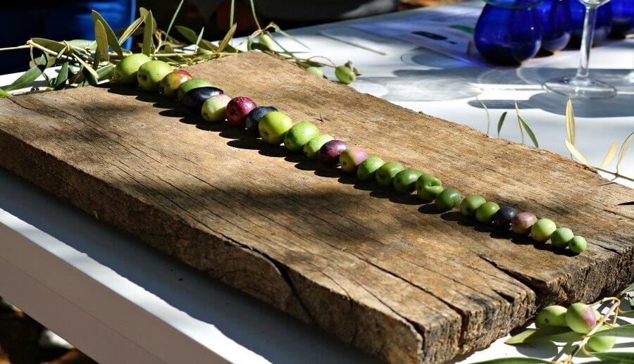 Distintas variedades de aceitunas