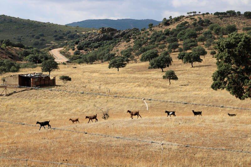 Animales en la Extremadura profunda