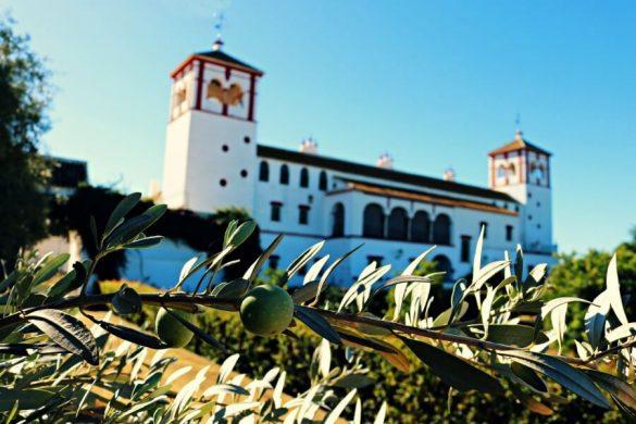 Oleoturismo en Sevilla en la Hacienda Guzmán