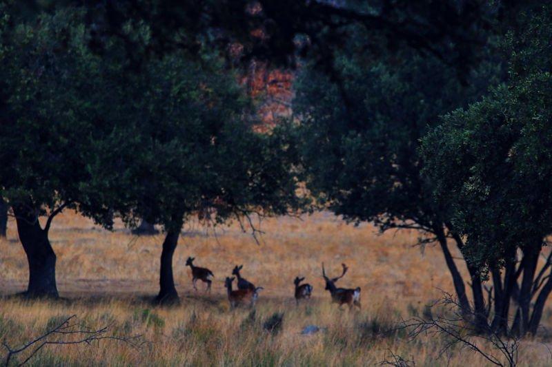 Ver la berrea en Extremadura