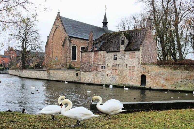 Los cien cisnes de Brujas