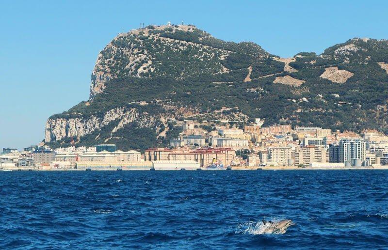 Avistar delfines en libertad - Qué hacer en Gibraltar
