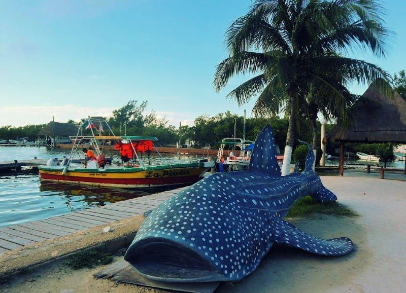 Ver el tiburón ballena en Holbox