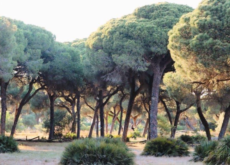 Pinares y naturaleza en la provincia de Cádiz