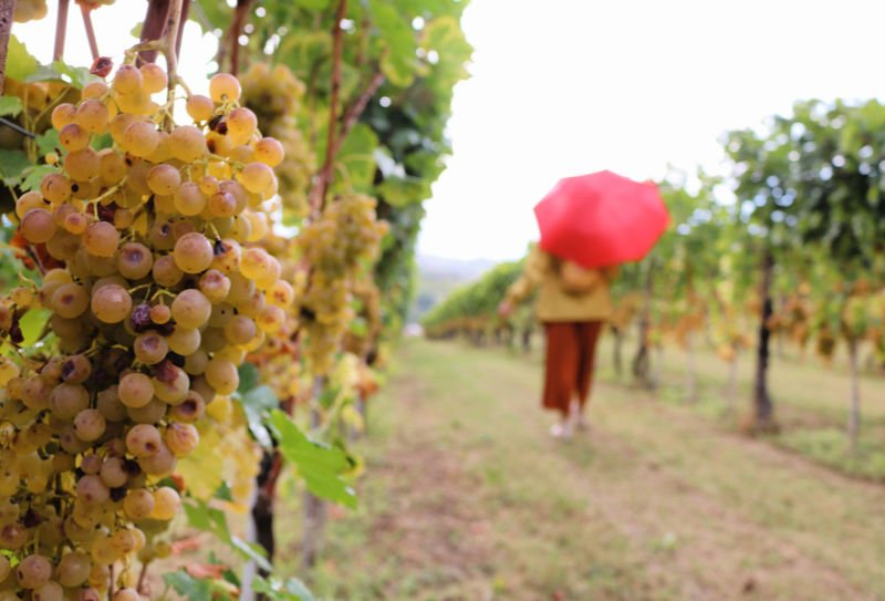 Ruta del vino por el norte de Italia