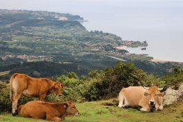 La naturaleza, lo mejor de Asturias