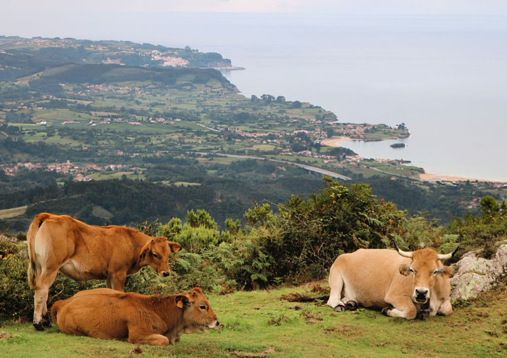La naturaleza, lo mejor que visitar en Asturias