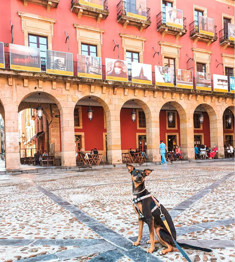 Bora en la Plaza Mayor, rutas de turismo en Gijón con perro