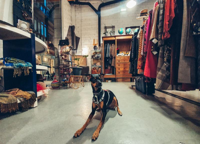 Bora se viene de compras, qué hacer en Gijón con perro