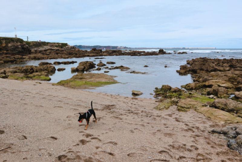 Playa para perros de El Rinconín