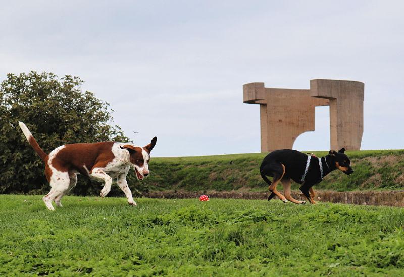Zona para perros en el Cerro de Santa Catalina