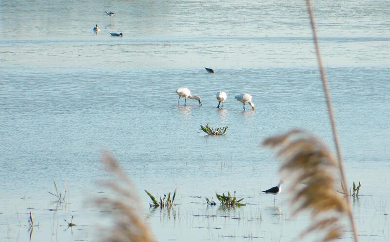 Las marismas del Odiel - Qué visitar en Huelva