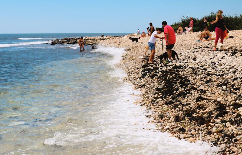 Playa canina de Punta del Riu en Campello