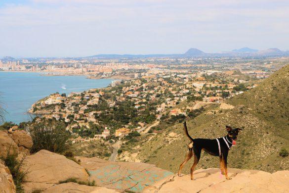 Qué hacer en El Campello con perro, turismo dogfriendly