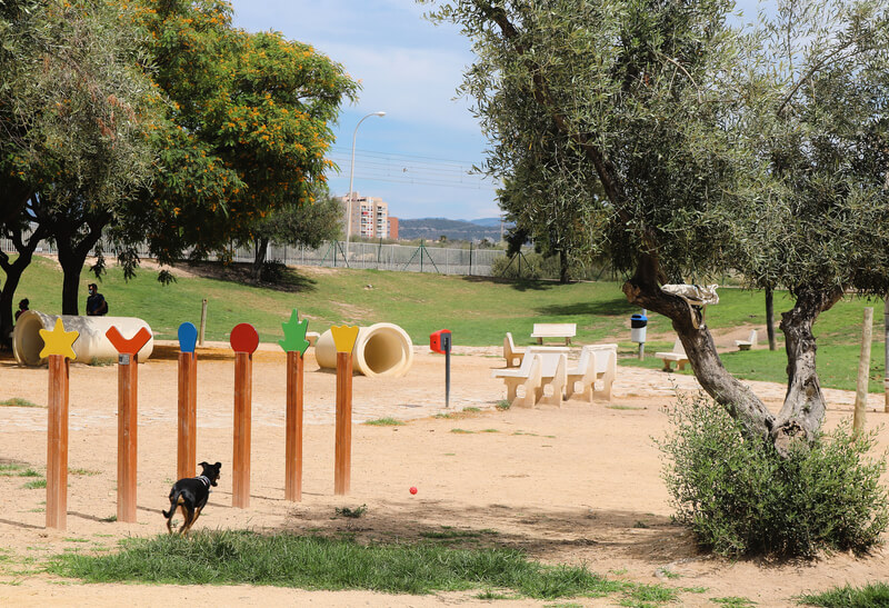 Rato de juegos en el parque canino