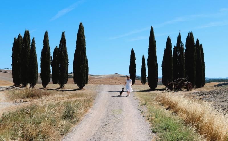 La bella estampa de los cipreses del Valle dell'Orcia